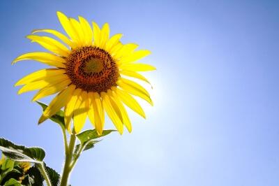 How Much Sun Do My Plants Need Gardening In Jasper