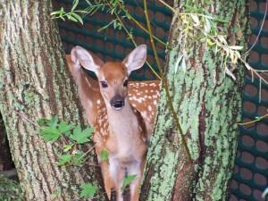 Deer Garden Img
