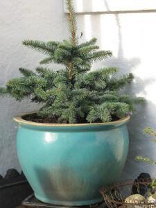Ball and Burlap Christmas Tree