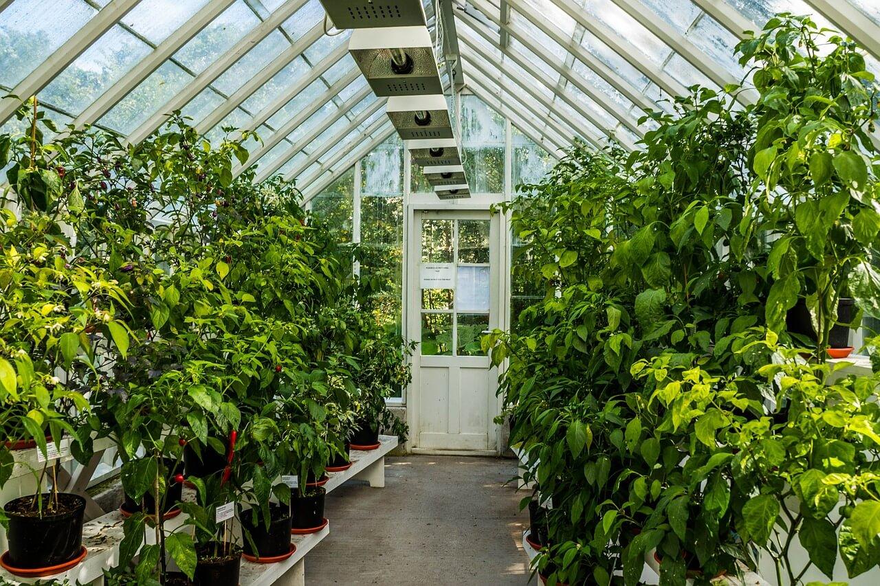 Swell Georgia Greenhouses Download Free Architecture Designs Ogrambritishbridgeorg