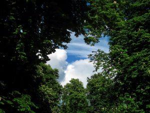 sky through the trees