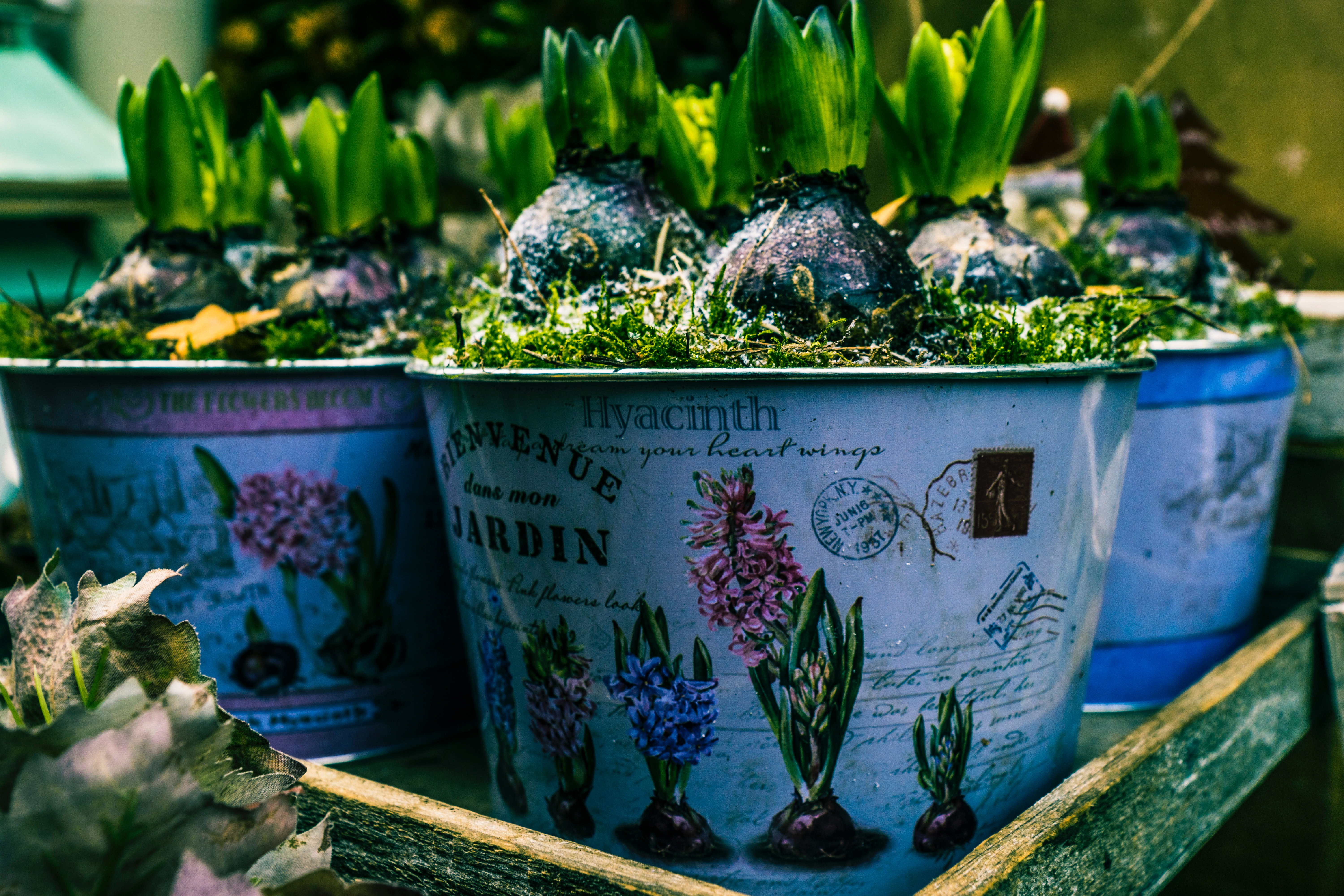 3 Tips For Creating A Beautiful Container Garden