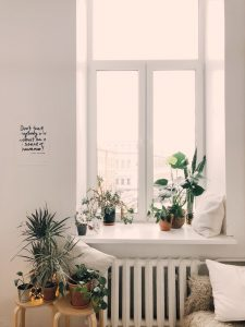An indoor container garden arranged around a window