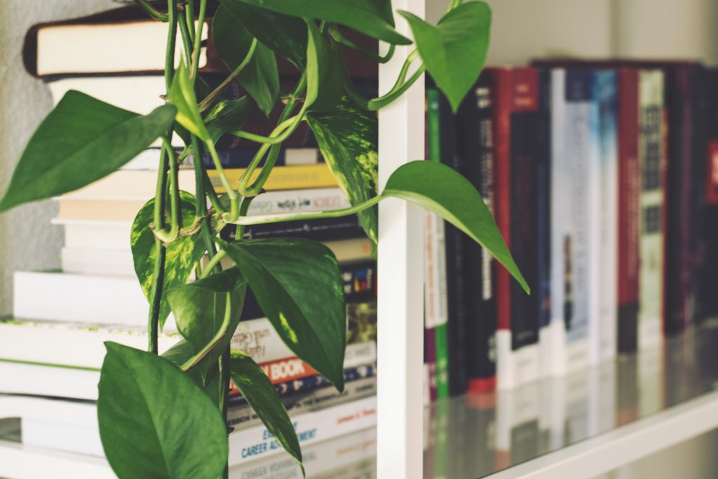 Pothos plant on bookshelf