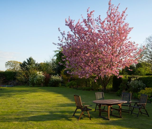 Pink blooming ornamental tree in sunny, landscaped yard