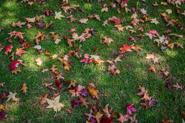 Colorful fall leaves on green grass