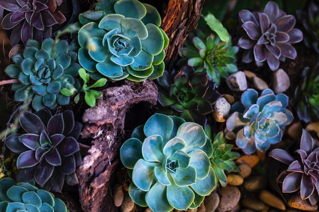 Colorful succulents and driftwood planting